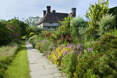 The Long Border, view to house, Spiraea japonica 'Goldflame', Allium cristophii