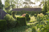 Yew topiary in long grass meadow
