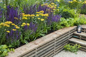 Raised bed made from reclaimed scaffolding boards, Salvia nemorosa 'Ostfriesland', Achillea 'Credo', Alchemilla mollis
