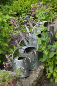 Old metal watering cans on wall