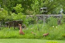 Terracotta duck ornaments, bird table and wooden wheelbarrow in long grass meadow