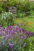 Erysimum 'Bowles' Mauve', Geum 'Totally Tangerine', beehive compost