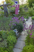 Shallots and Erysimum 'Bowles' Mauve' in kitchen garden, scarecrows