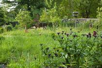 Duck ornaments in meadow, Centaurea 'Jordy'