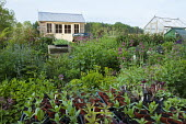 View across border to pavilion, seedlings in containers, Centranthus lecoqii