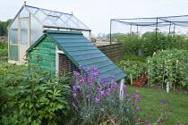 Chicken coop, greenhouse, fruit cage, Broad bean 'Jubilee Hysor', peony, Erysimum 'Bowles' mauve'