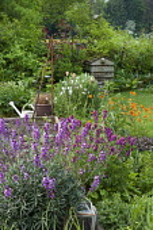 Erysimum 'Bowles' Mauve', Geum 'Totally Tangerine', beehive compost, watering can
