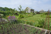 Shallots in raised bed, Erysimum 'Bowles' Mauve', view across lawn to shed