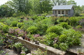 View across spring border to summerhouse, geraniums, saxifrage, centranthus, peonies, bench
