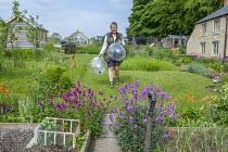 Val Bourne in her kitchen garden, Erysimum 'Bowles' Mauve'