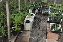 Seedlings in seed trays, watering cans