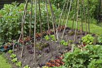 Bean pole wigwams, lettuces, Broad beans, terracotta cane top eye protectors, strawberries