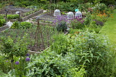 Square timber-edged raised beds in kitchen garden