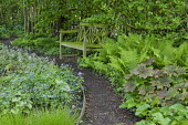 Wooden bench, Diphylleia cymosa, ferns, Brunnera macrophylla 'Kings Ransom'