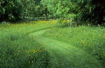 Mown grass path through wildflower meadow