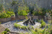 Sundial, herbs, lavender and nasturtiums in raised beds, rose climbing on fence, slate chippings