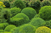 Cloud-pruned yew and box hedges, rose arch