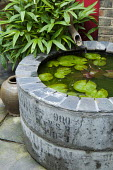 Circular water feature made from industrial concrete sewer pipe and slate, bamboo fountain, Sasa japonica