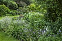 Cottage garden planting, geraniums