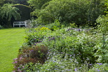 Country garden, geraniums, bench overlooking lawn