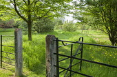 Metal fence and gate, mown path through long grass meadow
