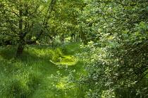Mown path through long grass