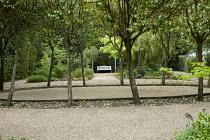 Petanque pitch, Ligustrum lucidum, view to bench