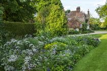 Cottage garden planting, Anthriscus sylvestris 'Ravenswing'