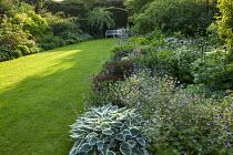 Country garden, geraniums, bench overlooking lawn, Hosta 'Patriot'