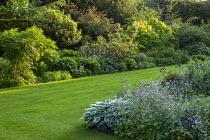 Country garden, geraniums, Hosta 'Patriot'