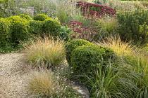 Cloud-pruned box shrubs in gravel border, hylotelephium syn. sedum