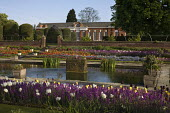 Kensington Gardens, London; The sunken garden, laid out in 1909 with the Orangery beyond;  spring display with tulips, wallflowers, pansies and forget-me-nots.