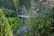 White metal bench, Persicaria amplexicaulis 'Alba', colchicum, bergenia, Anemone x hybrida, yew hedge