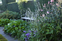 White metal bench, Persicaria amplexicaulis 'Alba', colchicum, bergenia, Anemone x hybrida