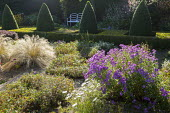 Formal garden, row of clipped box pyramids, aster, Stipa tenuissima, white bench