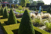 Formal garden, row of clipped box pyramids, girl statue by Nathan David, Stipa tenuissima, view to pergola