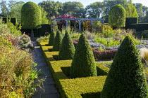 Row of clipped box pyramids, formal parterre garden, pergola