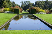 Formal rectangular pool in lawn, clipped yew cubes