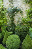 Clipped box and holly shapes in border, stone wall plaque, rose