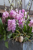 Pink hyacinths, willow catkins and Easter eggs in container