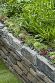 Dry-stone wall planted with sempervivums