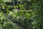 Path lined with Liriope muscari, narcissus, euphorbia