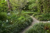 Gravel path lined with Liriope muscari, narcissus, cornus, viburnum, tree seat