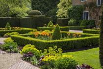Tulipa 'Ballerina' and box pyramids in box-edged borders in front of house, yew hedges, euphorbia, heuchera