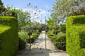 View through metalwork pear gates by Arc Angel to large terracotta vase, box topiary, path lined with yew topiary and lavender