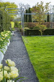 Contemporary pergola, garden 'rooms', lawn, gravel path, Tulipa 'Ivory White' in containers