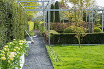 Contemporary pergola, garden 'rooms', lawn, gravel path, Tulipa 'Ivory White' in container