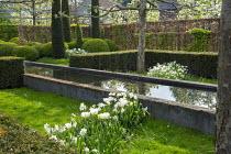 Tulipa 'Casablanca', Narcissus 'Thalia', formal raised pond, yew hedge