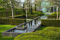 Yew hedge enclosing formal raised pond, Tulipa 'Casablanca', pleached fruit trees, cloud-pruned box hedges