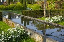 Yew hedge enclosing formal raised pond, Tulipa 'Casablanca', Narcissus 'Thalia', cloud-pruned box hedges